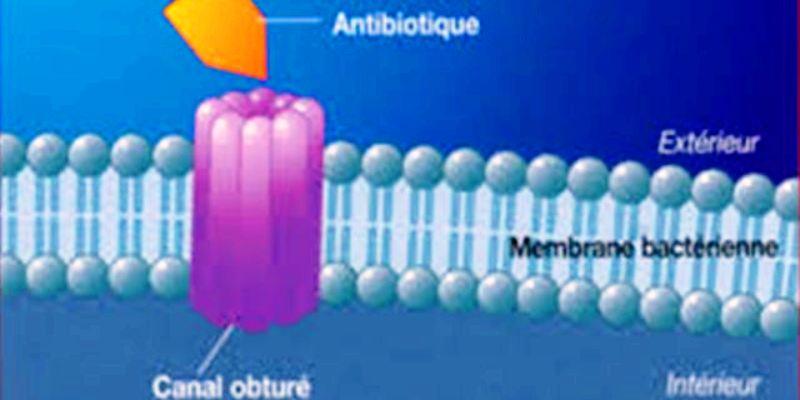 pathogene